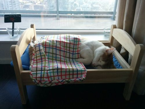catbed (5)