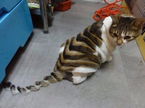 funnycatscut (1)