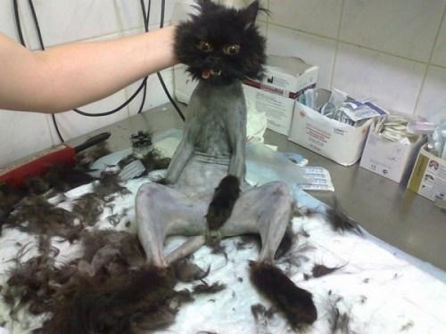funnycatscut (14)