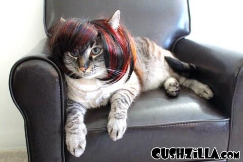 funnycatscut (9)