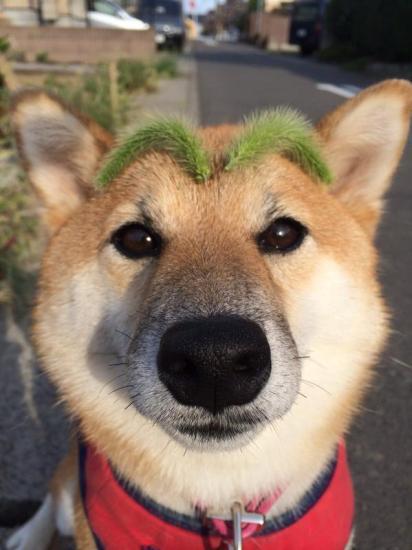 onlydog (6)