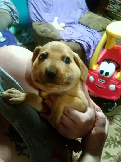 onlydog (8)