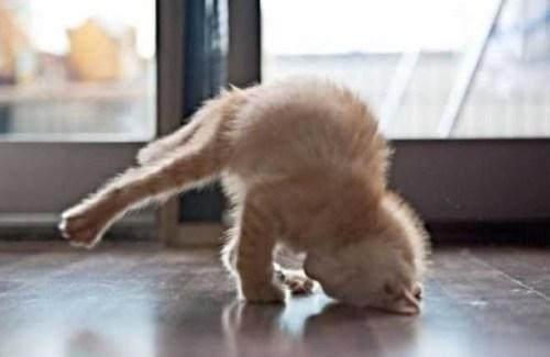 2051_funny-cats_0ff