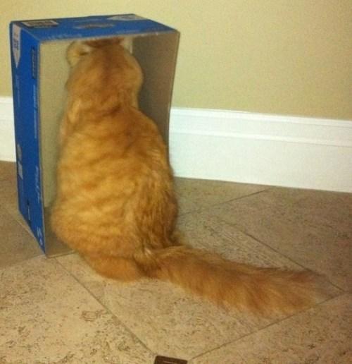 catsdanger (7)