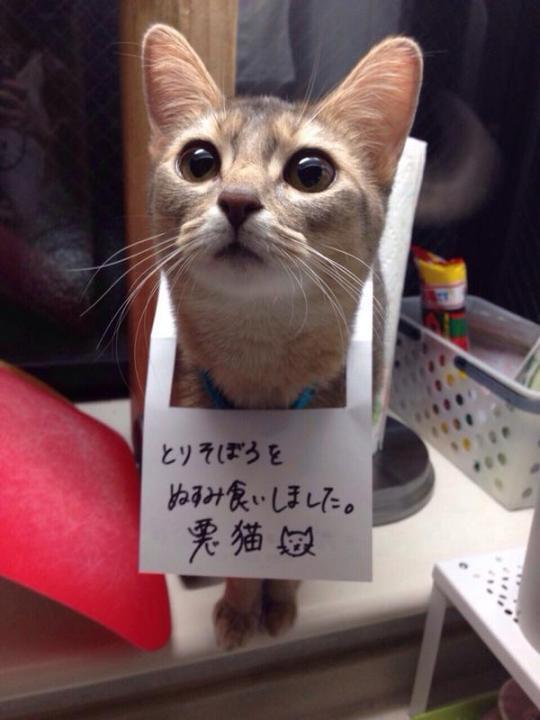 cat_funny (12)