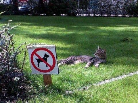 cat_rule (13)