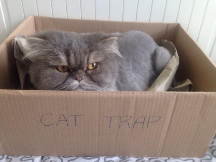 cat_rule (3)