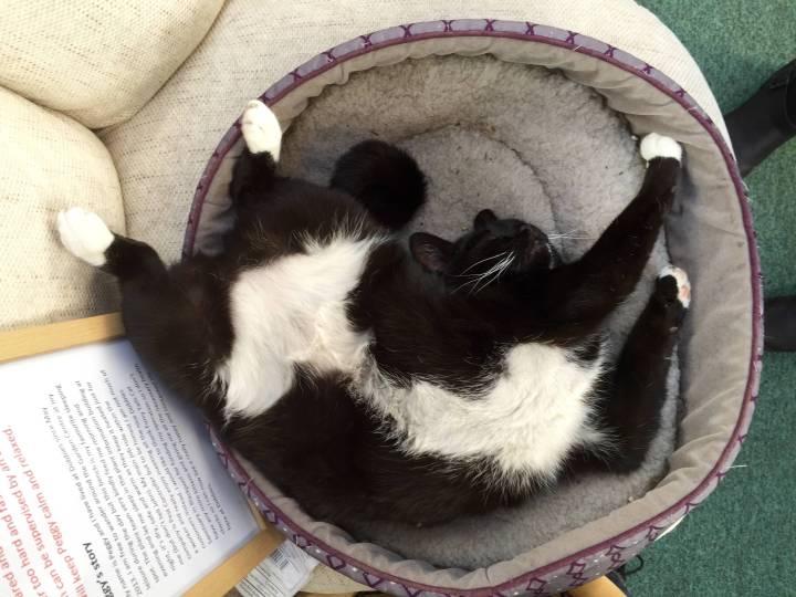 cat_rule (9)