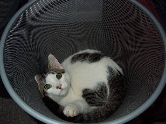 cat_unhappy (8)