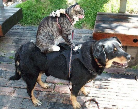 catanddog (15)