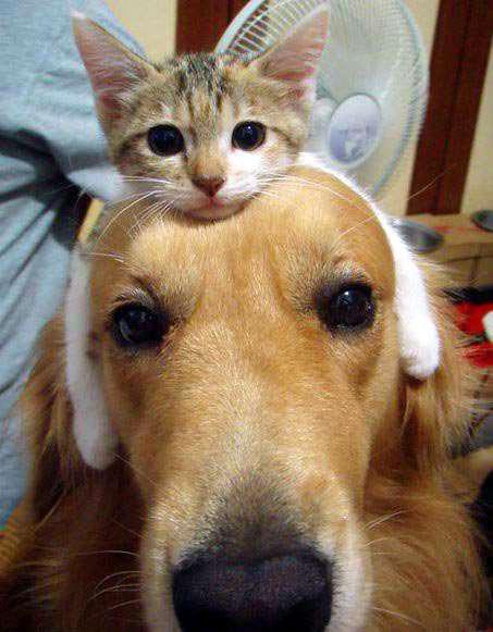 catanddog (22)