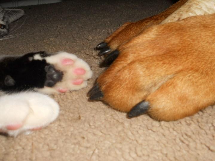 catanddog (4)