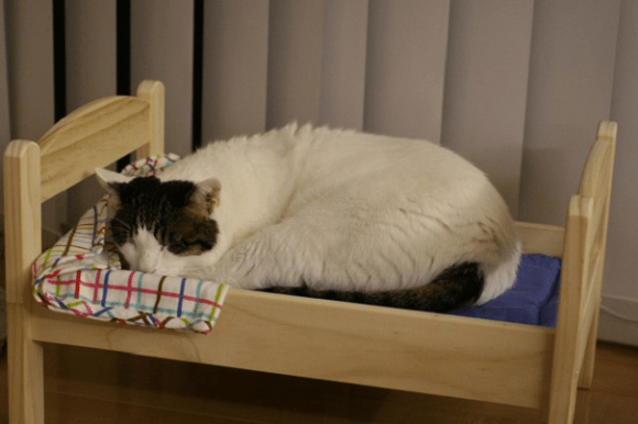 catbed10