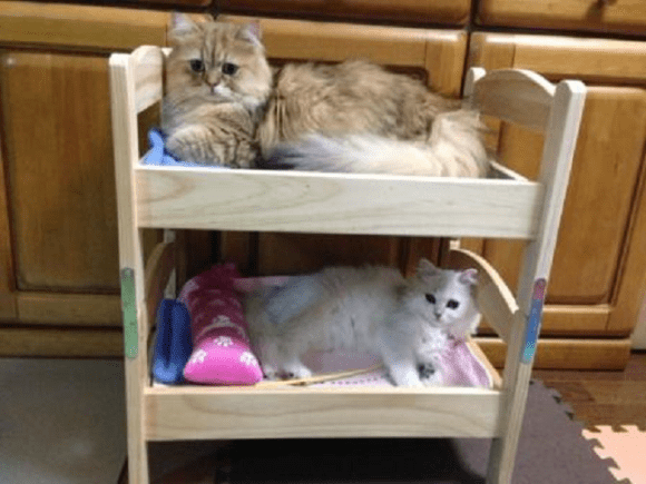 catbed11