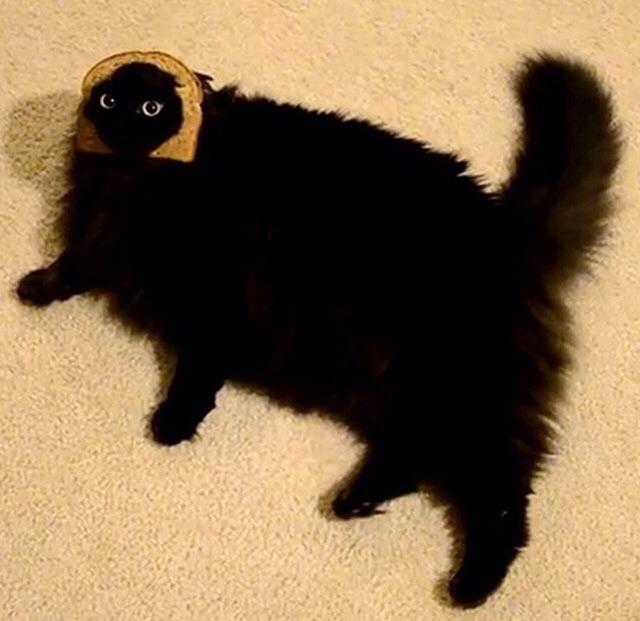 curazy_cat (4)