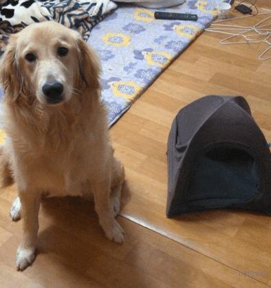 doghouse5
