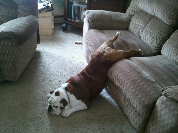 funnydog (6)