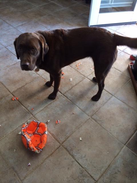 funnydog (9)