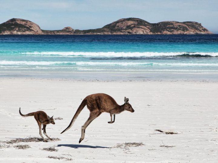 kangaroo_pet (13)