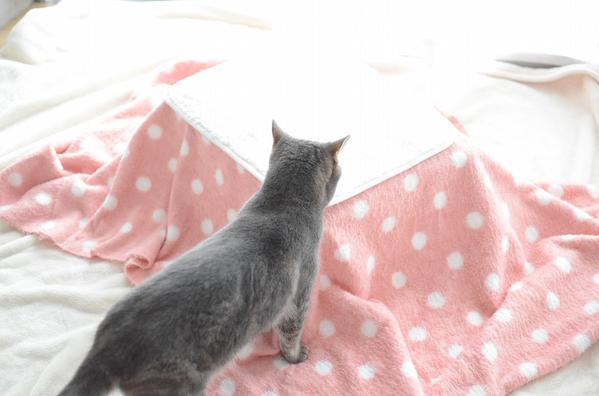 kotatu_cat (4)