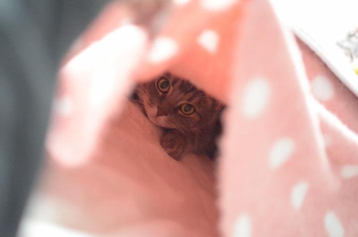 kotatu_cat (6)