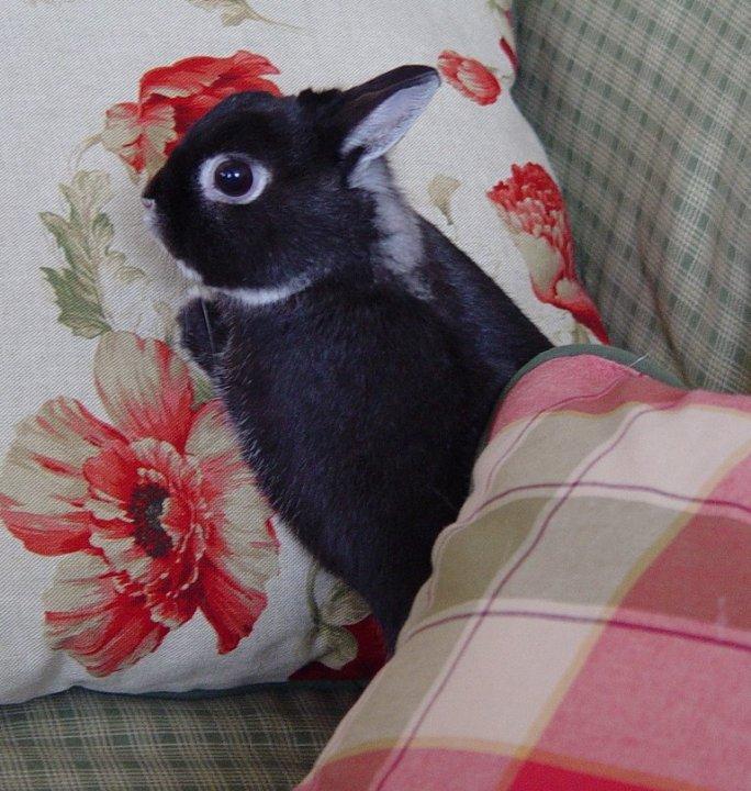 penguin (17)