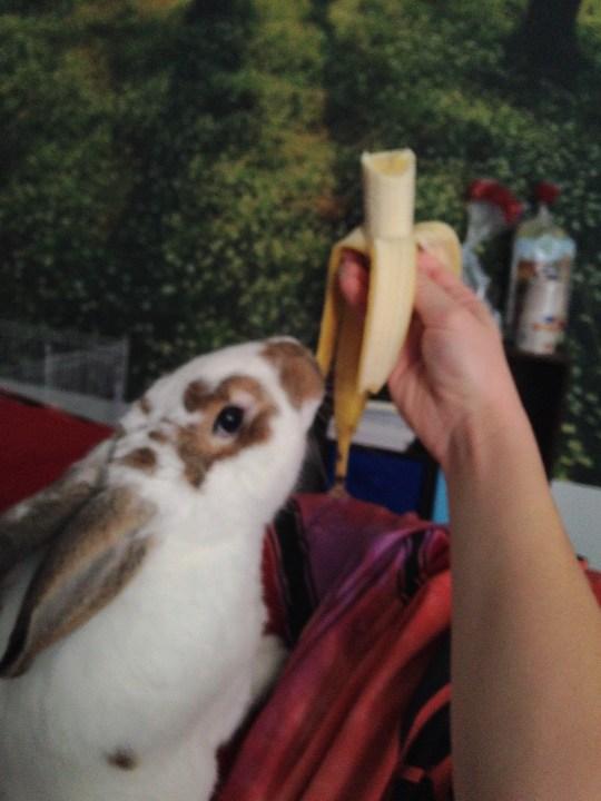 rabbit (6)