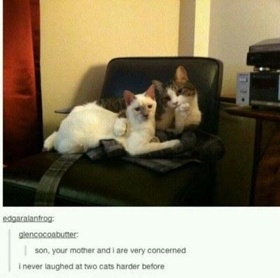 surprisecat (12)