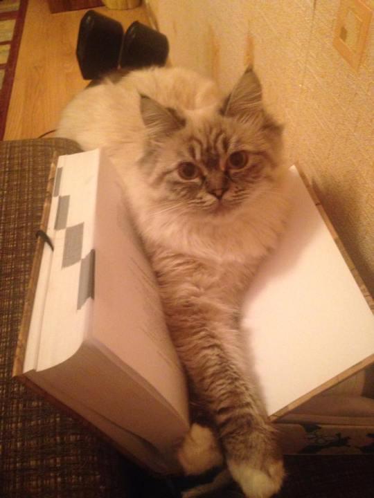 surprisecat (16)