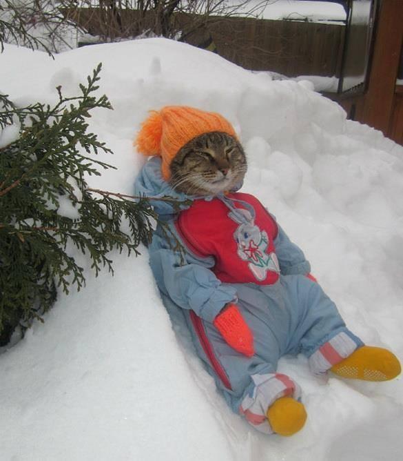 surprisecat (5)
