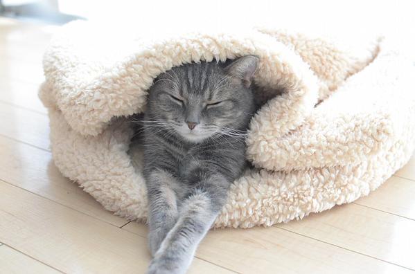 catlife (10)