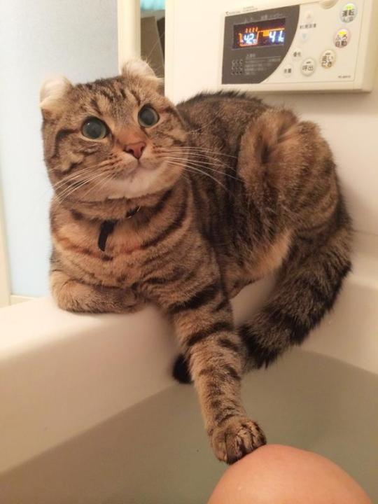 catlife (2)