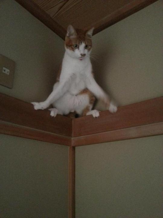 catlife (3)