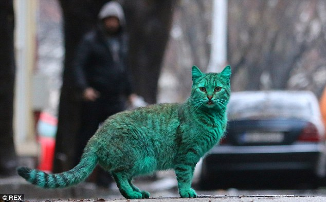 colorfulcat3