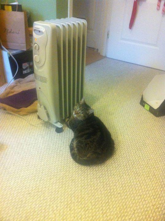 heater_animal (14)