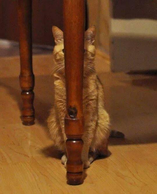 othercat (4)