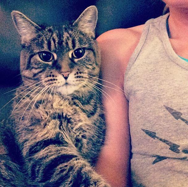 othercat (6)