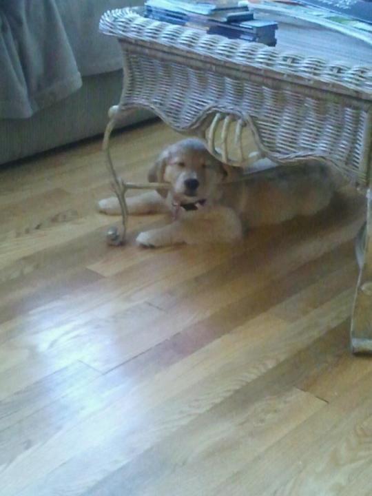 speakabledog (3)