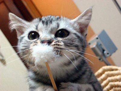 cat_happen (10)