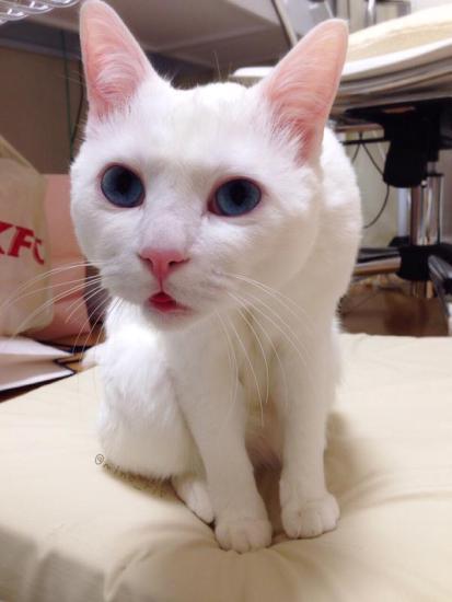 cat_happen (3)