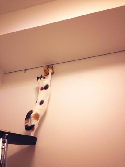 cat_happen (6)