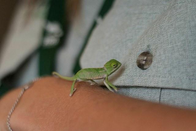 chameleonBABY (4)