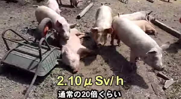 fukusima_osen