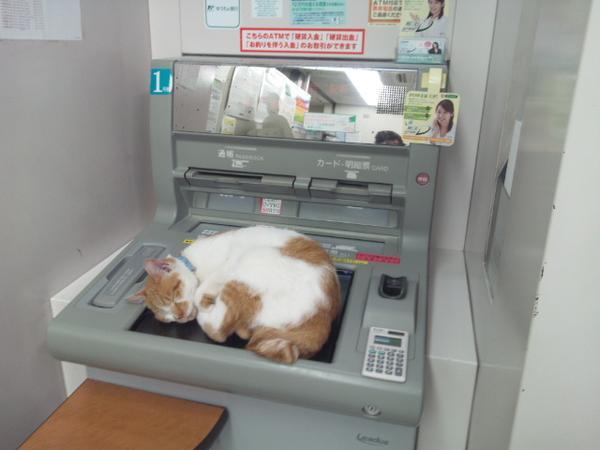 bankcat3