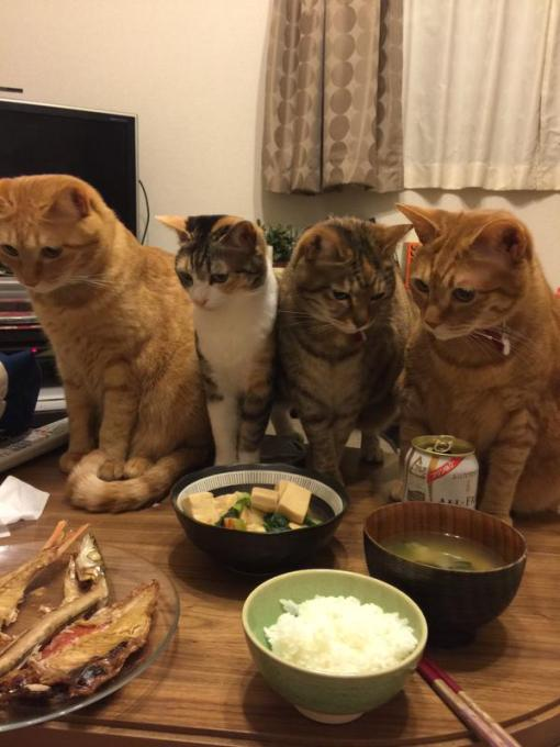 cat_saikyo (14)