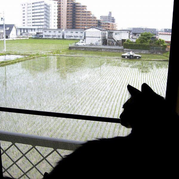 cat_saikyo (3)
