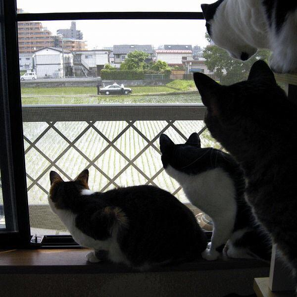 cat_saikyo (4)