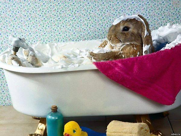 bunny5