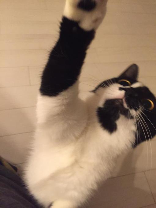 cat_ton (3)