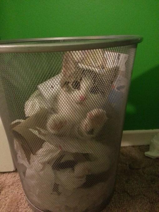 catlife (24)
